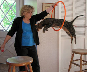 Cat jumping through hoop