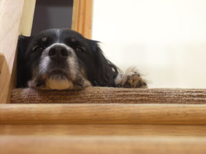 Dog at the top of the stairs