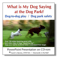 What is My Dog Saying in the Dog Park