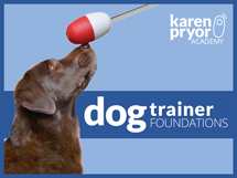 dog trainer foundations course