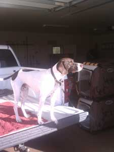 Gus on the pickup truck bed