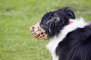happy dog wearing a muzzle