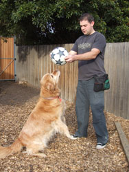 holding soccer ball above dogs head