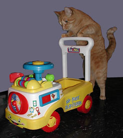 cat pushing toy cart