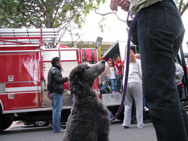 Ollie and a firetruck