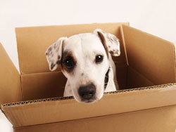 dog in a box & 101 Things to Do with a Box | Karen Pryor Clicker Training Aboutintivar.Com