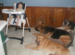 dogs next to highchair