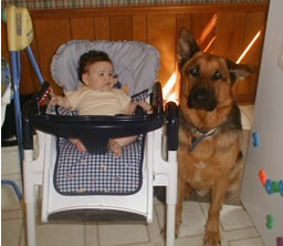 dog sitting next to highchair