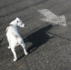 Aidan Bindoff Dog Training
