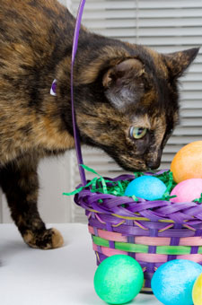 cat with easter basket