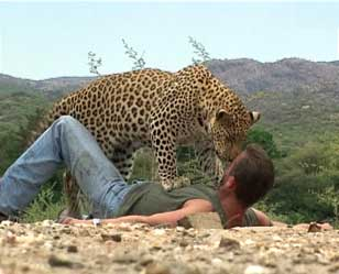 Ah Yes... that IS a 'WILD' leopard...