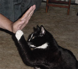 Phoebus giving our webmaster a high-five