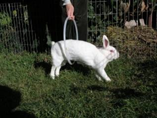 Rabbit going through a hoop