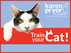 Train Your Cat!